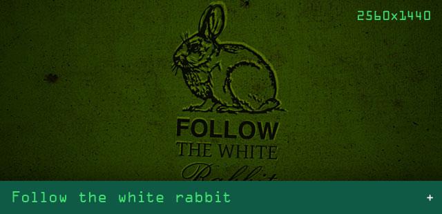 03-Artikel_Bilder_VORSCHAU_640x310_Rabbit